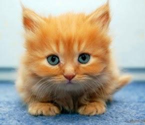 Anda Rasa Kucing Ini Comel? Klik Foto
