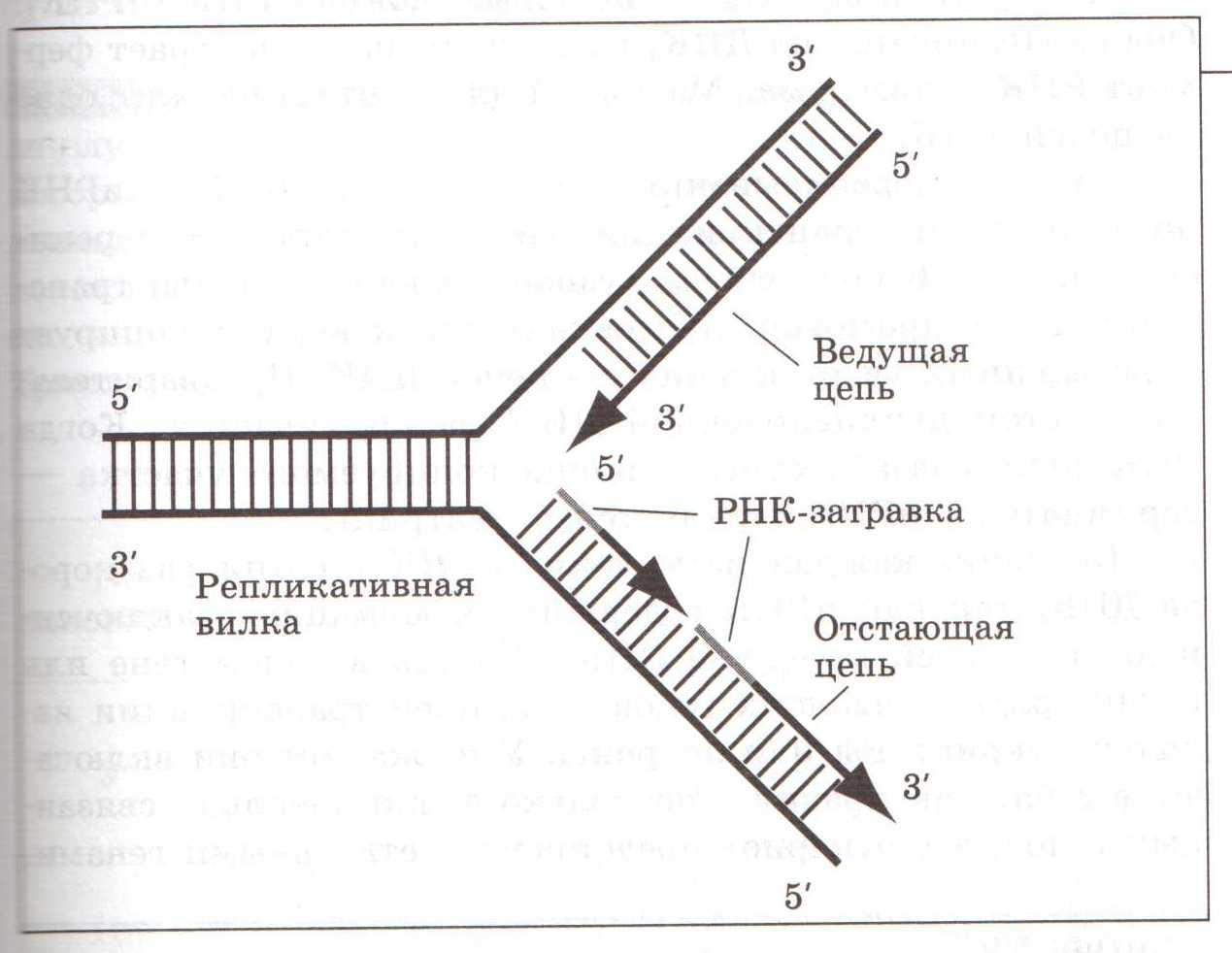 Тест по геометрии 7 класс белицкая ответы