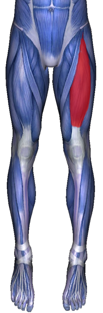 Los Angeles Chiropractic: Quadriceps Stretches for Pain ...