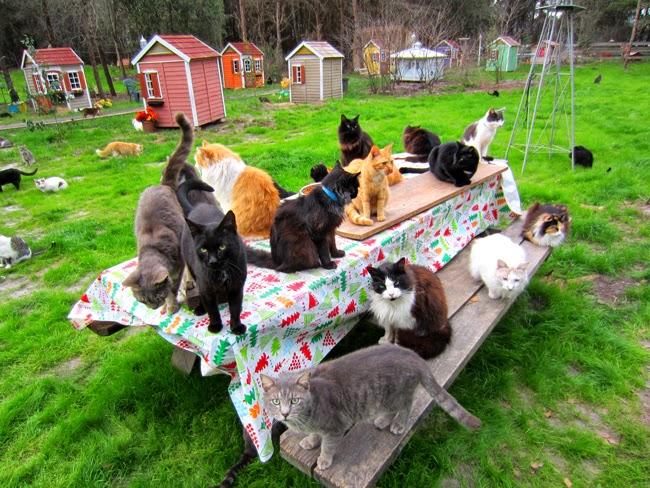 Rumore di fusa caboodle ranch il villaggio dei gatti in for Piccoli progetti di ranch