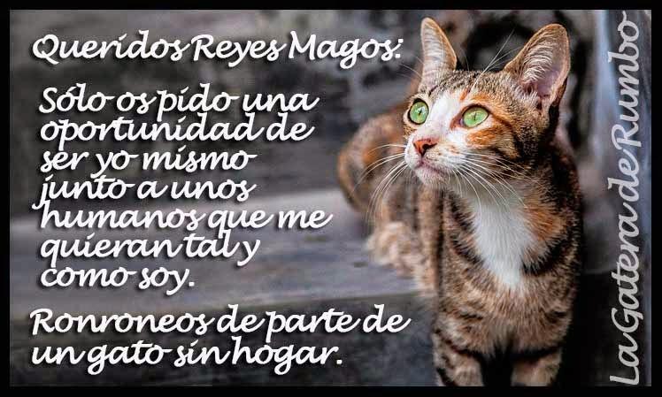 Carta gato sin hogar a RR. MM.