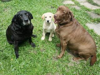 filhas caninas!