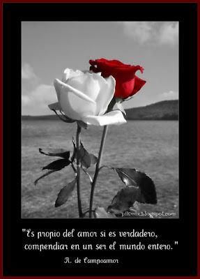 Propio del amor • Imagen con frase • Rosas