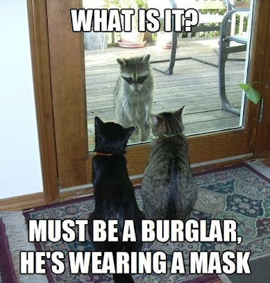 Two cats stare out the door looking at a raccoon and thinking it must be a a burglar.