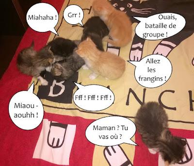 Bataille généralisée pour sept petits chatons !