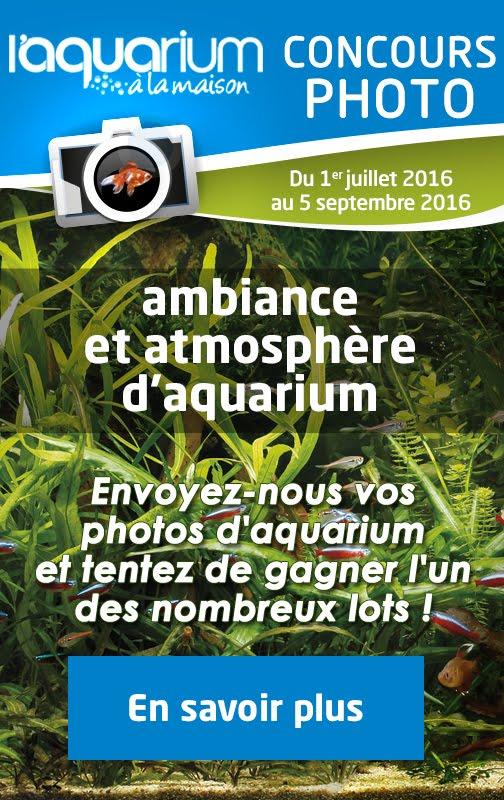 Concours Photo L'Aquarium à la maison