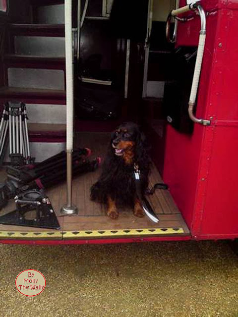 Molly The Wally On The Buses!