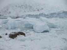 Neko Harbour - Actual Antarctica Continent Landing