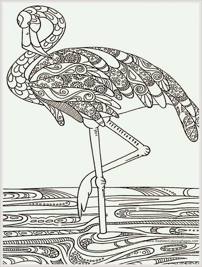 Heron Bird Adult Coloring Pages Free Realistic Coloring