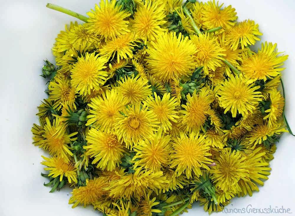 Blüten vom Löwenzahn