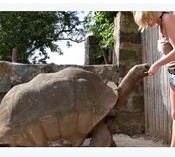 Amazing to see a big Pet Tortoise for 150 years old