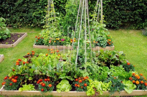 Gardens ideas rai beds gardens summer gardens cottages gardens raised beds summer - Mixed style gardens ...