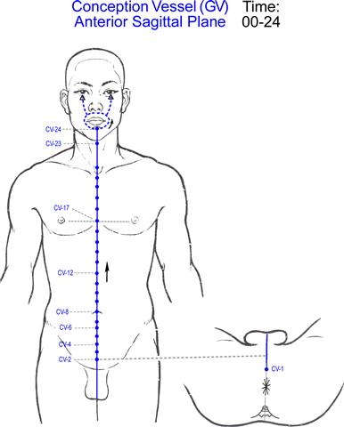 Teoria de los puntos de presión: El canal central - Vaso Concepción