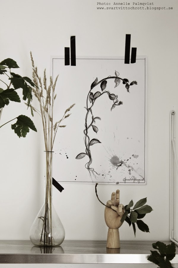 måla växter, växt, växten, växter, svart och vitt, hylla med gröna växter, grönt, svart, vitt, svarta, vita, skogen, skog, ikea hylla,
