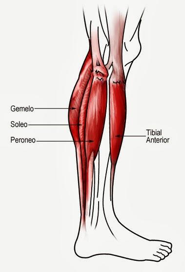 Duele el músculo gastrocnemio después del calambre - Estiramiento de ...