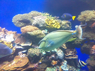 Visiting The Underwater Observatory in Israel's Red Sea Town, Eilat