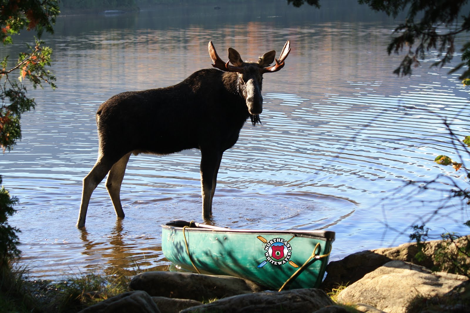 Maine Moose Watching site