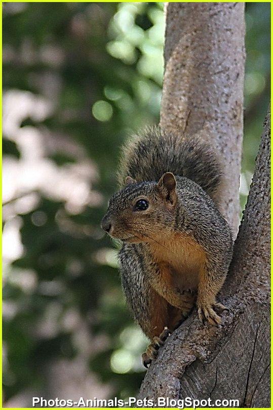 http://2.bp.blogspot.com/-RUpvBDX5D1w/TtyVTeJiMTI/AAAAAAAACb8/0AOWgaLX8hY/s1600/Image%2Bsquirrel.jpg