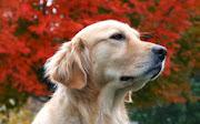 Beautiful Dogs HD