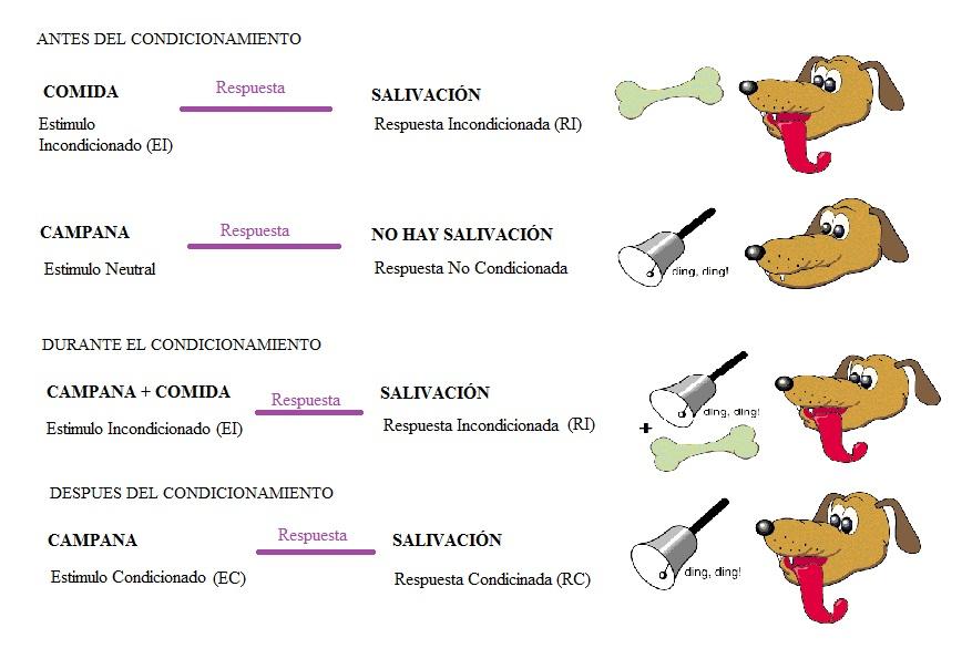 el condicionamiento clasico y operante:
