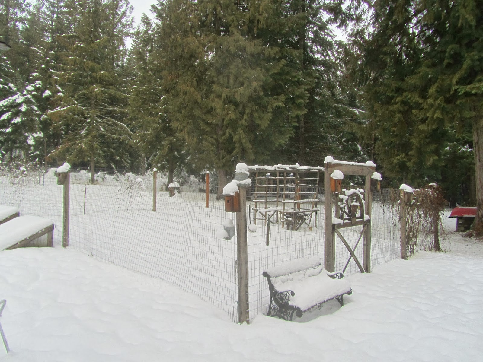 Garden in winter covered with snow