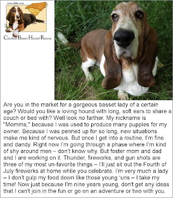 Treasure Thursday Dog with Carolina Basset Hound Rescue
