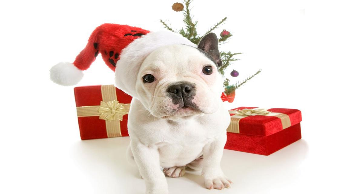 christmas puppy wallpaper - photo #10