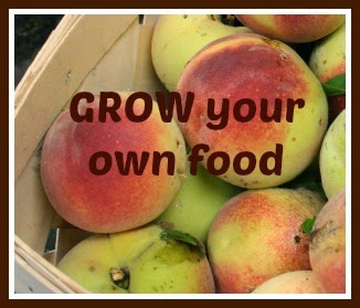 Grow healthy food!