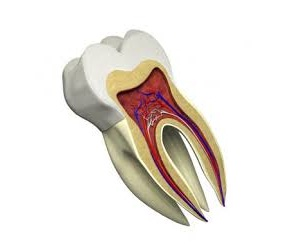 masalah gigi pada anak tk balita indonesia usia dini dan solusinya