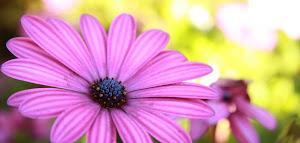 Ιστοσελίδα της Οικολογίας για την Λαμία και την Φθιώτιδα