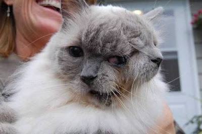 Two faces Cat