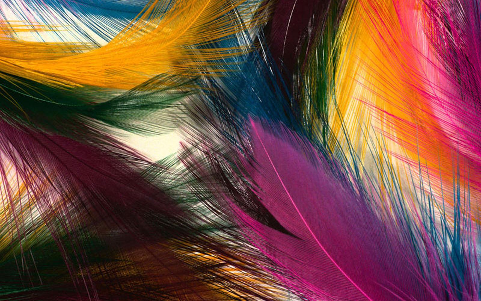 feathers wallpapers salon des refus s
