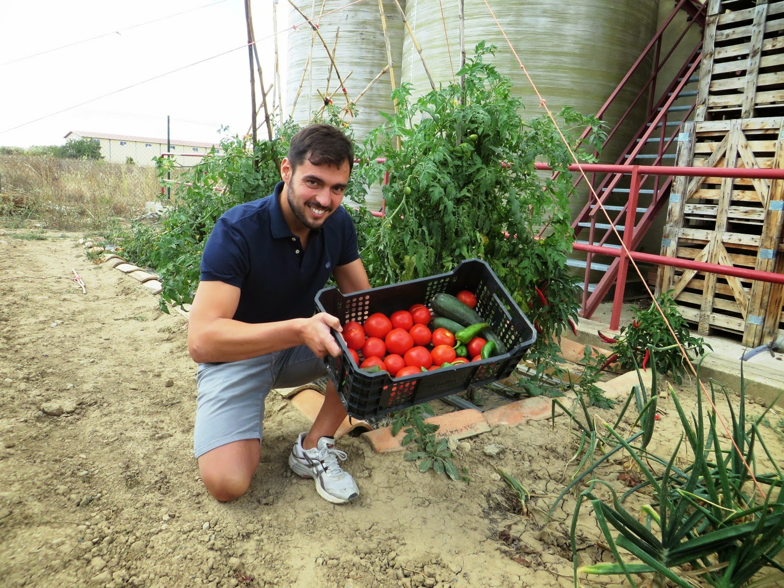 Urbina vinos blog cultivo de tu propio huerto tomates for Plantar pimientos y tomates