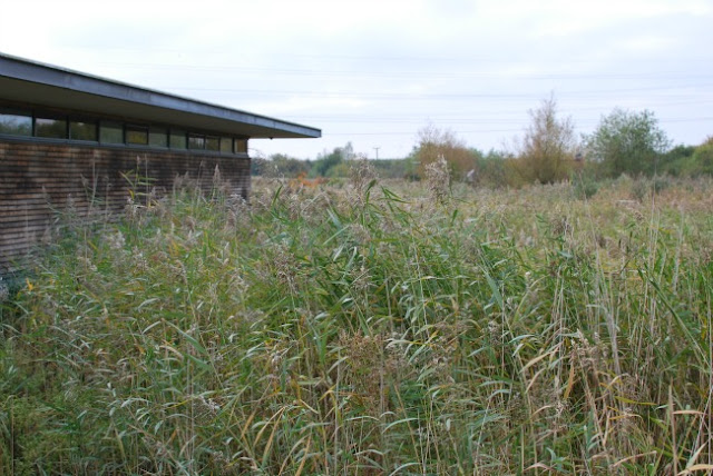 picture of tall grass and low building
