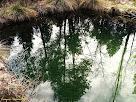 """Reflexes a la bassa del Vilar. Autor: Francesc """"Caminaire"""""""