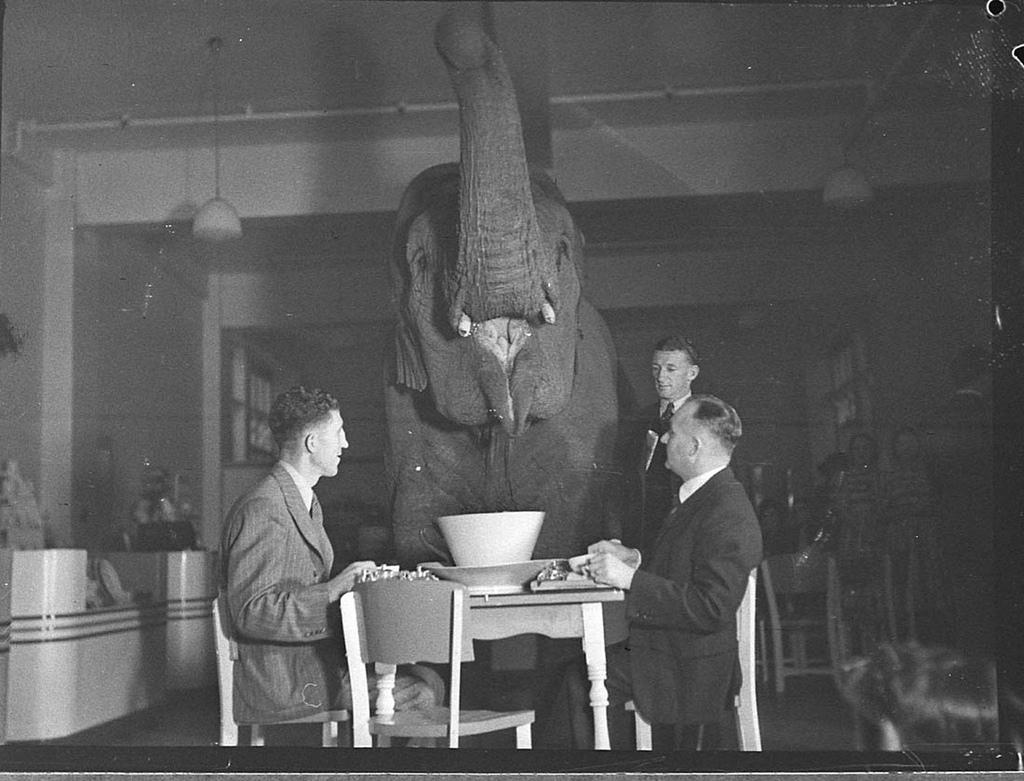 http://2.bp.blogspot.com/-RX4Bpf_NWLg/UhnKb1iXeKI/AAAAAAAALf4/h-hf_SHl-gk/s0/Elephant%27s+tea+party,+Robur+Tea+Room,+24+March+1939,+by+Sam+Hood.jpg