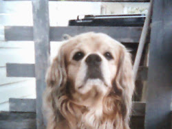 Puppy à 9 ans