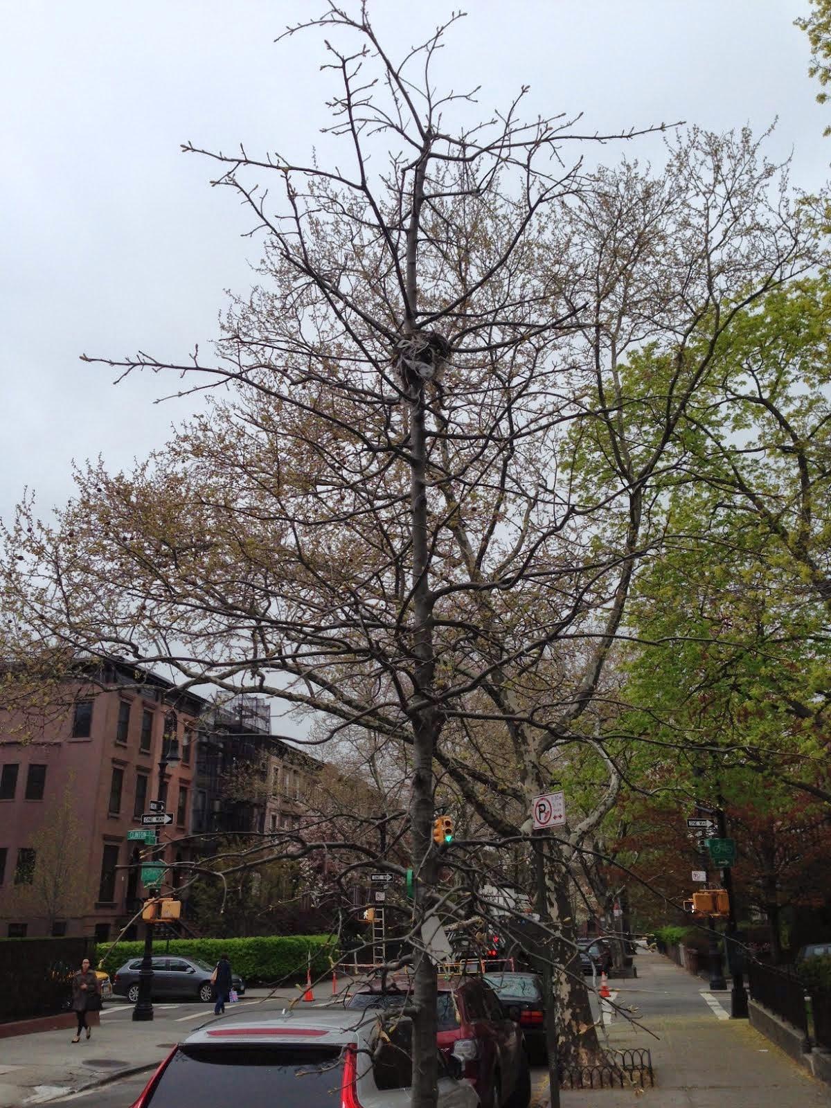 Brooklyn Streets Carroll Gardens Last Unit Of Affordable