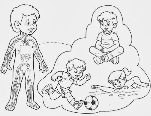 Dibujo del sistema oseo para preescolar de don coco - Imagui