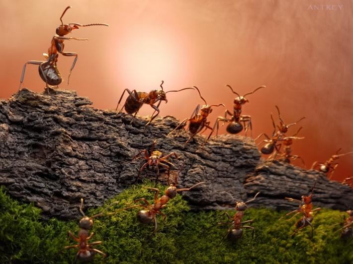 Imagem de Formigas  na pedras