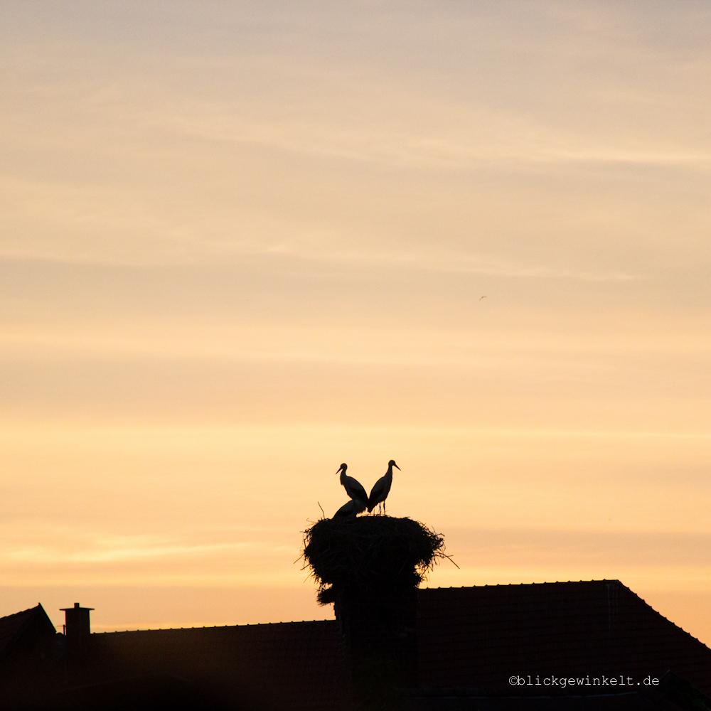 Störche im Sonnenuntergang