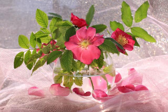 Hình ảnh hoa đẹp 09