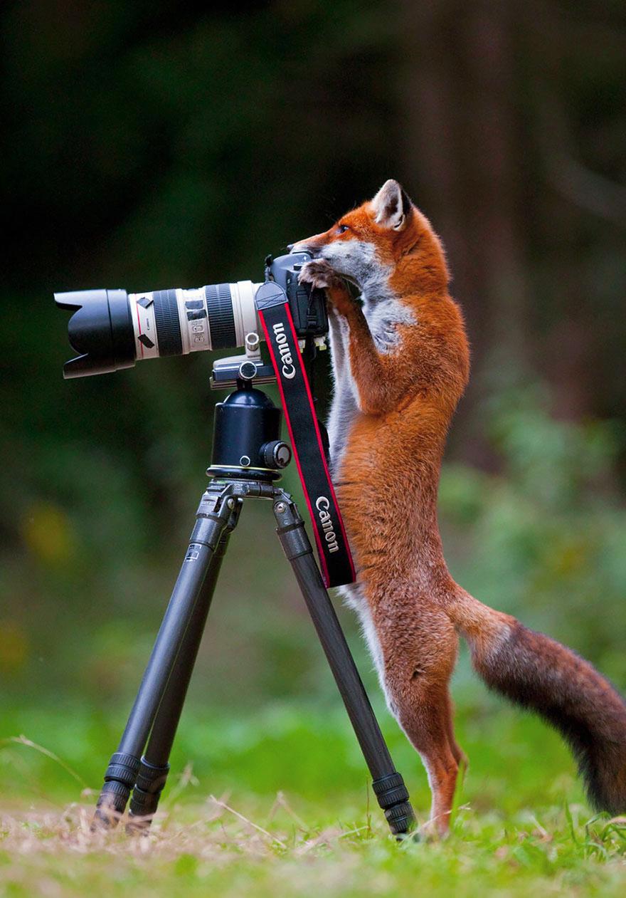 حيونات تعشق التصوير
