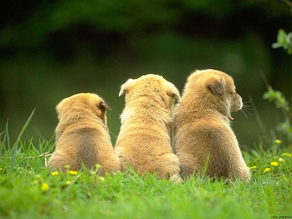 Wallpapers: stunning cute puppies pictures and wallpapers of dogs