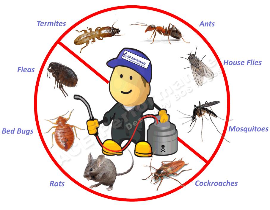 Jacksonville Pest Control