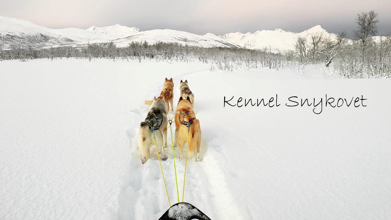 Snykovet Siberian Husky Kennel