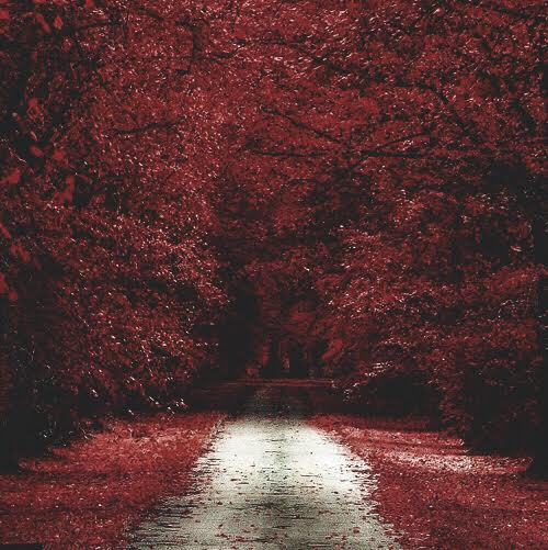 Red Wood Red Autumn Trees Abstract, Modern, Art, Color, Red