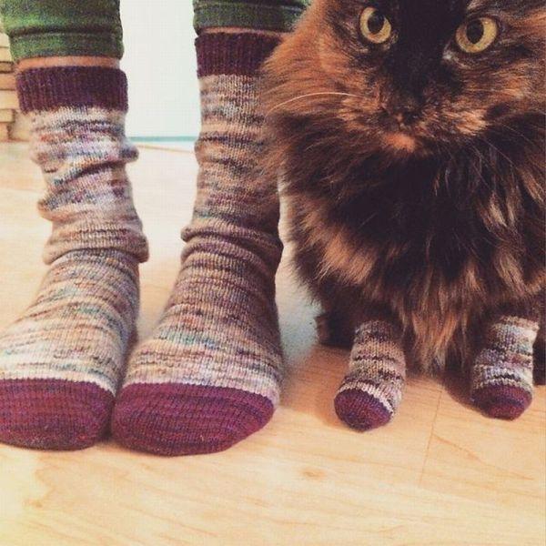Funny cats - part 161, best cat photos, funny cat pictures, cute cat