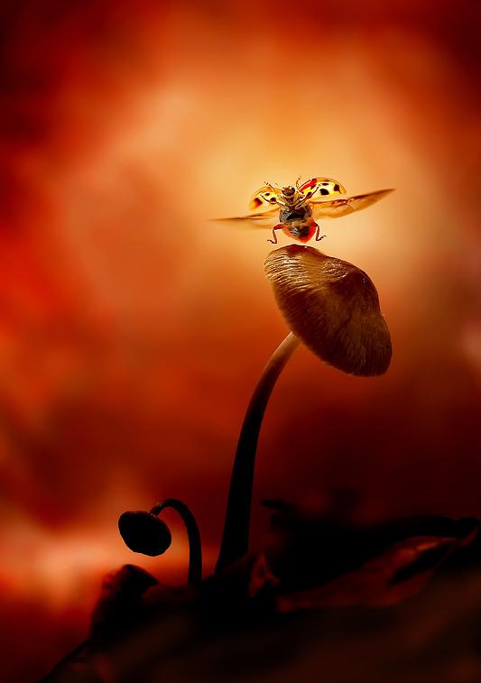 Dancing ladybird by Leon Baas