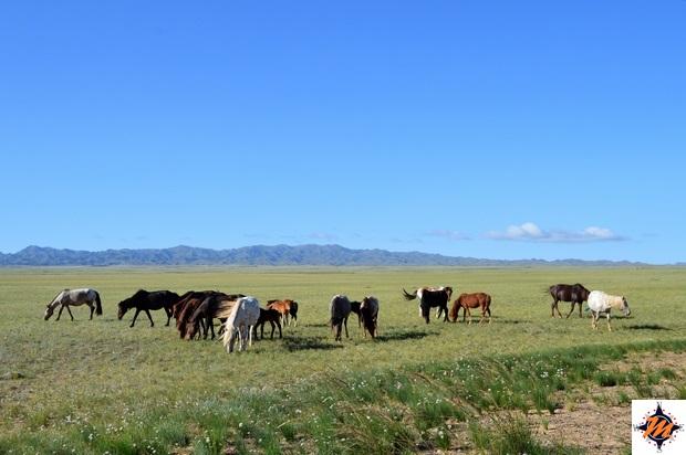 Percorrendo la steppa mongola